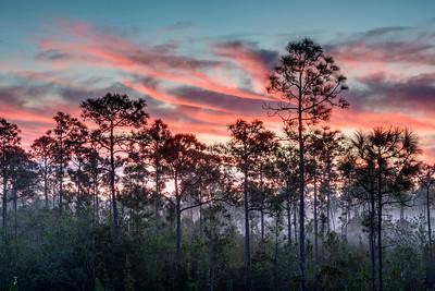 Sunrise in the Everglades 2