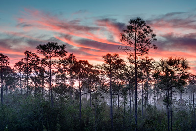 Sunrise in the Everglades 2