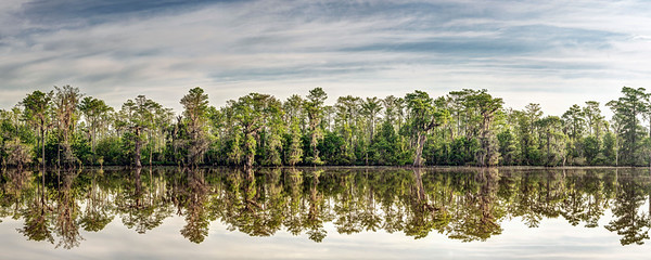Swamp Reflection