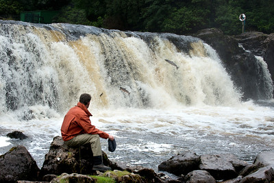 Watching seatrout and salmon leaping Assleagh Falls River Erriff Co Galway Ireland