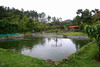 Rancho Comedor - their talapia pond out back (pescado for the restaurant) - near the town of Ujarras - San Jose province