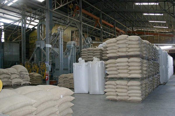 Coopedota Santa Maria (coffee mill) - jute bags and larger synthetic containers of processed coffee beans ready for export - Cordillera Tilaran (mountains), northwestern slopes - San Jose province