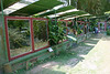 Parque Reptilandia - near Dominical (town) - Puntarenas province (central)