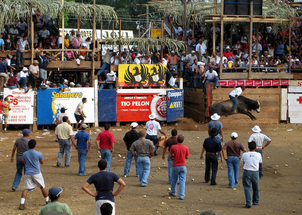 Tican Rodeo - spectators will jeopardize their safety for a front row seat - Guanacaste province (north-central)