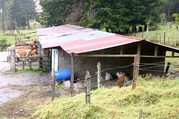 Milk Barn - near San Rafael (village) - located in the Central Highlands coffee region - the western slope of the Cordillera de Talamanca - San Jose province (southern)