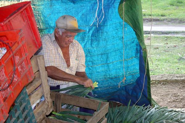 Bundling onion stalks for sale at the Turrialba Mercado - Cartago province