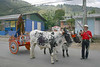 Festival at Orosi (village) - the oxen pulling a hand painted wooden cart , with a wooden statue of christ, leading the parade - Cartago province (western)