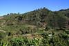 Coffee fields near the town of Santa Maria de Dota (St. Mary the Provider) - in the Terrazu region - San Jose province