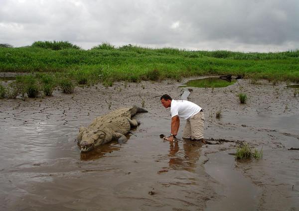 Hand-feeding a Croc on the Rio Tarcoles - near the village of Capulin - Puntarenas province (north)