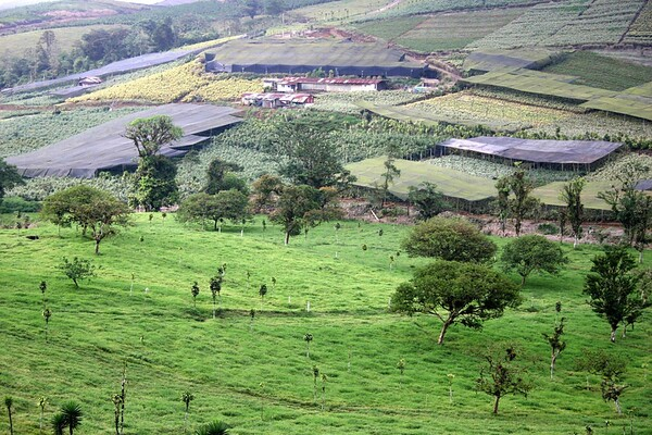 Plant Farm - near the village of La Tigra - Alajuela province (western)