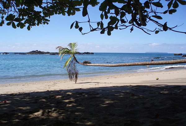 Horizontal Coconut Palm at Playa San Josecito, southwest of Drake (town) - beyond the coastal rock outcrops, out to Isla Cano (Cano Island), a marine biological reserve, about 12 mi. (19 km) off the coastline of the western Osa Peninsula - Puntarenas province
