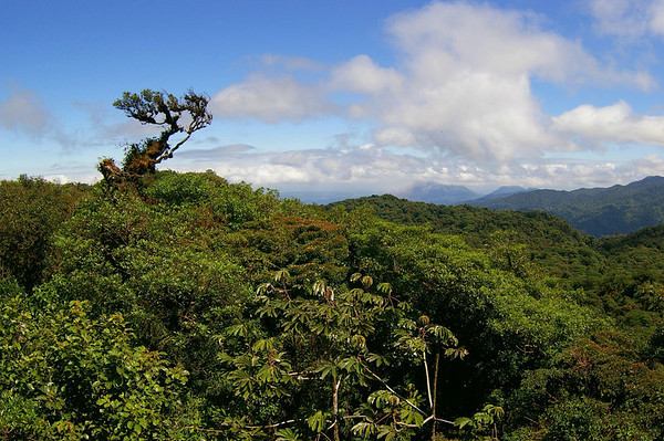 Across the canopy of the Santa Elena Cloud Forest Reserve - in the Cordillera de Tiliran (mountains) - to the partially covered Arenal Volcano - this area of Costa Rica adjoins 3 provinces (Guanacaste, Puntarenas, and Alajuela)