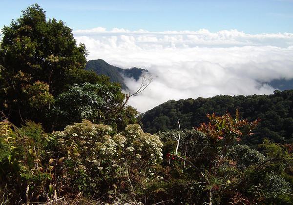 Along the slopes of the Irazu Volcano - Irazu Volcano National Park - Cordillera de Central (mountains) - Cartago province