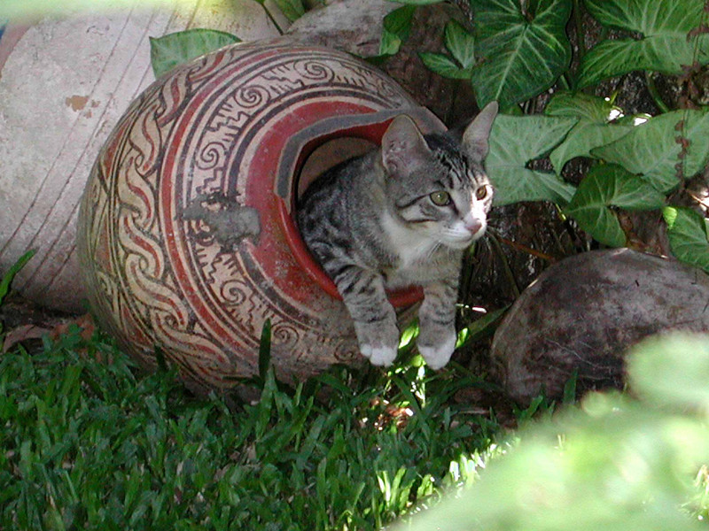 Alajuela Tico-kitty<br /> likes showing off pottery collection