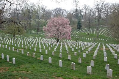 050407 2786 USA - Washington DC - Arlington Cemetery _D _E _N ~E ~L