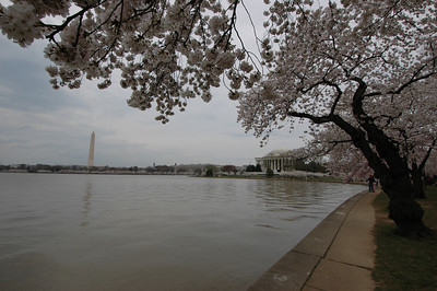 050407 2697 USA - Washington DC - Cherry Blossoms _D _E _I ~E ~L