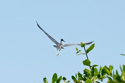 080119 9530B Costa Rica - Manuel Antonio - Mangroves Boat Tour _E _L _G ~E ~L
