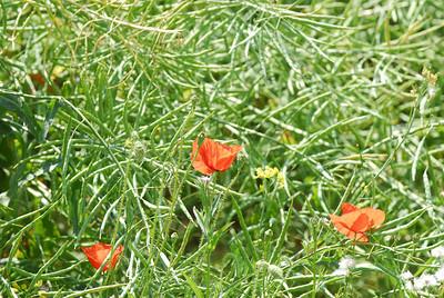 060617 1945 England - Sonning Common - David Yulia Jean Alan Zara _F ~E ~L