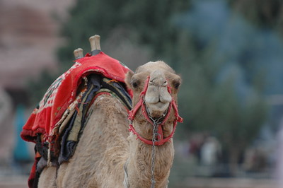 060104 1071 Jordan - Petra - Yulia and David _E _F _N ~E ~L