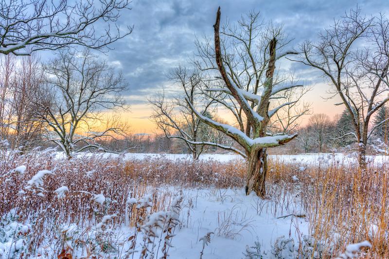 Dead Tree at Skylands
