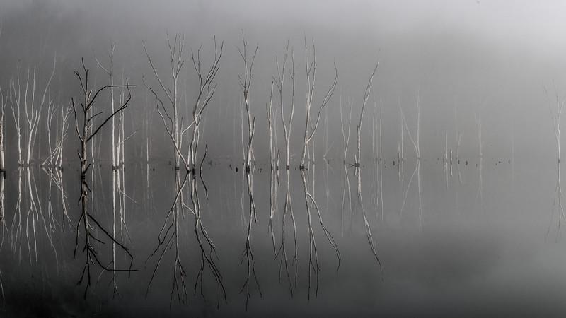 A David Gardiner Image