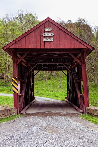 The Plants Bridge