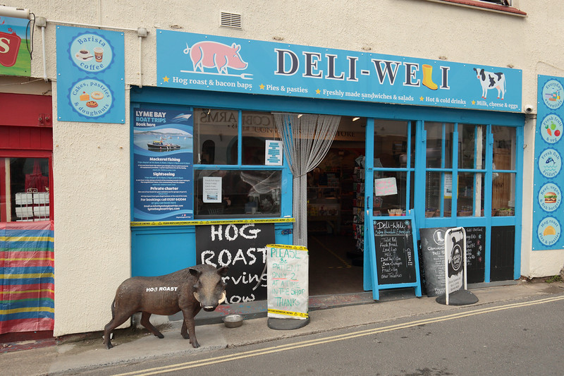 Patient hog Lyme Regis by Andy White