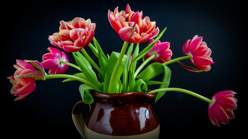 Aldi Tulips by Cathy Warne