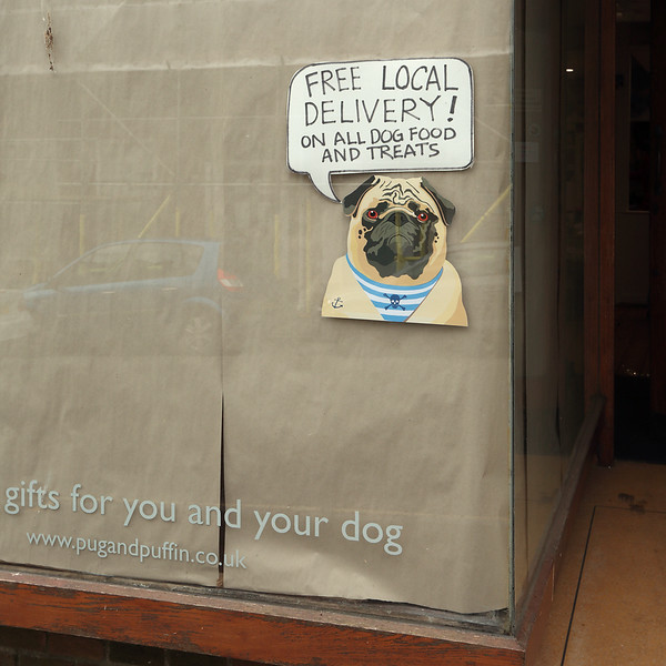 Lockdown pug delivers by Andy White