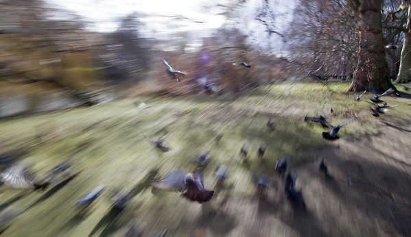 It's All Just A Crazy Blur To Me....Pink Pigeon Legs, St Jame's Park, London