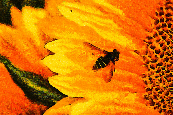 Sunflower Hoverfly