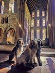 Three Spinone in a Priory