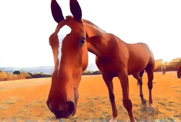 Horse Prisma Art created by Heidi Anne Morris