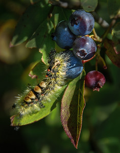 Caterpillar Fruit Stand