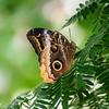 Butterfly seen at Day Butterfly Center - Callaway Garden - Pine Mountain, Georgia -USA
