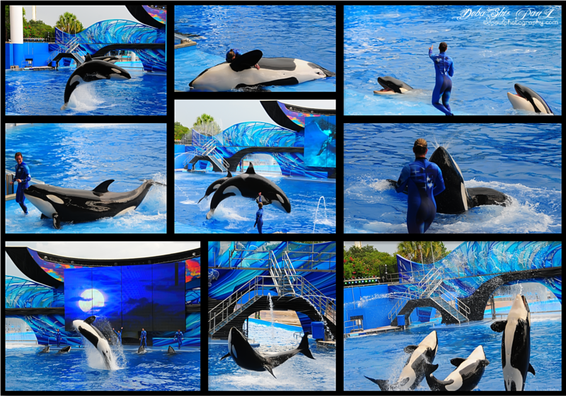 Shamu's Dolphin Show - Orlando , Florida - USA