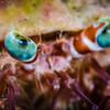 Hermit Crab, Dauin, Philippines