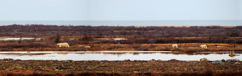The Hudson Bay