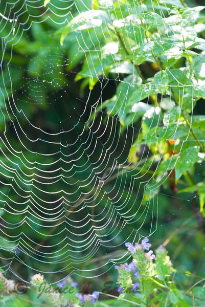 """Blue Ridge Parkway Web"""