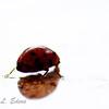 """Ladybug Reflections"""