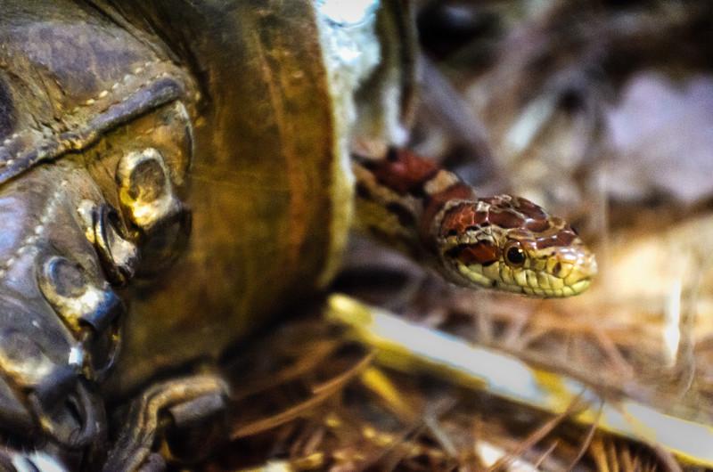 """Snake in Boot"""