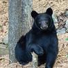 """Bear Model"""