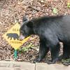 """""""Bear Crossing"""""""