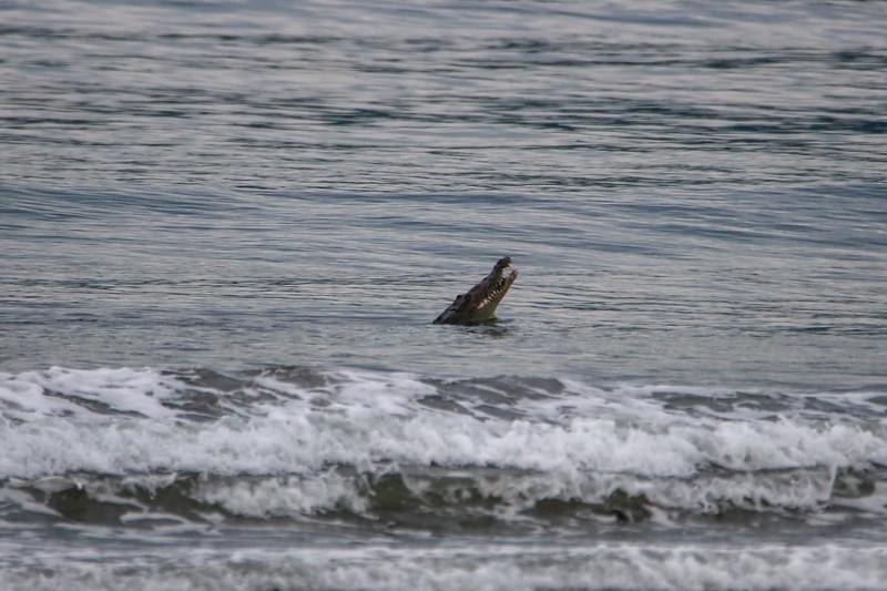Oceangoing Crocodile