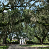 Boone Hall Plantation & Gardens (1681) - Avenue of Oaks