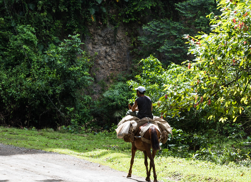 Farmer and his harvest heading to market near Baracoa