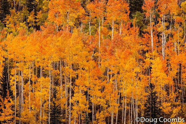 Durango Mountain Resort