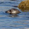 Monterey 2012
