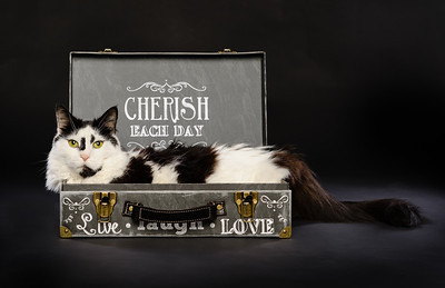 Cherish Each Day_A Life Well Lived Series