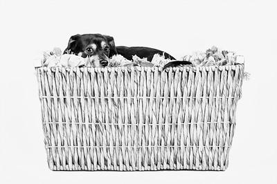 'A Basket Of Bella'